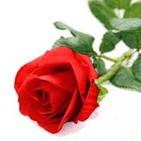 Servietten 24x24 cm - Rosa Nobile