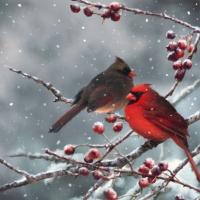 Servietten 33x33 cm - Cardinal Birds on snowy Branch