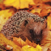 Servietten 33x33 cm - Hedgehog in Maple Leafs