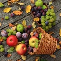 Lunch Servietten Autumn Fruits Still Life