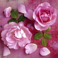 Servietten 33x33 cm - Hot Pink Roses