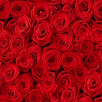 Servietten 33x33 cm - Beaucoup de Roses