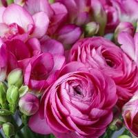 Servietten 33x33 cm - Rosa Freesie & Persischer Butterblume