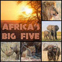 Servietten 33x33 cm - Africas Big Five