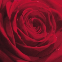 Servietten 33x33 cm - Belle Rose du Matin red