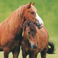 Servietten 33x33 cm - Two Horses