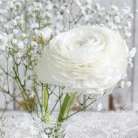 Servietten 33x33 cm - Rêve Blanc