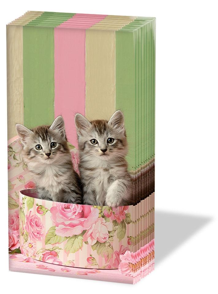 Taschentücher - Katzen in der Box