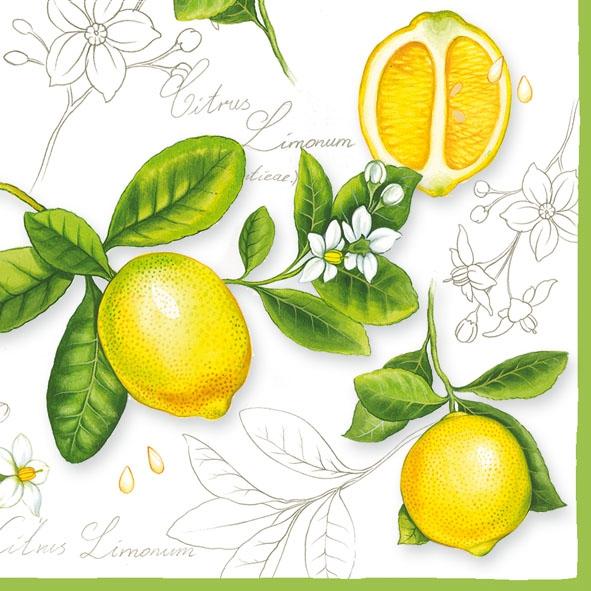 Servietten 33x33 cm - Citrus Limonum
