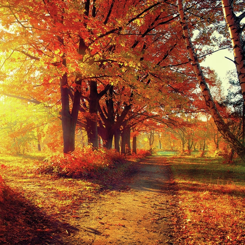 Servietten 33x33 cm - Autumn Park