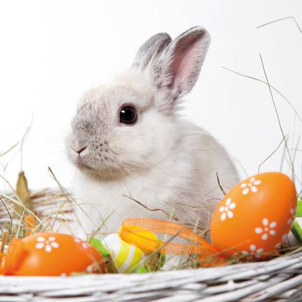 Servietten 33x33 cm - Weißes Kaninchen