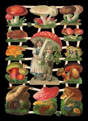 Glanzbilder - Pilze