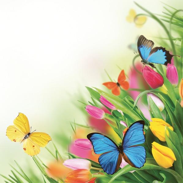 Servietten 33x33 cm - Tulpen & Schmetterlinge