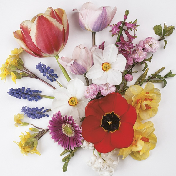 Servietten 33x33 cm - Spring Flowers from Garden