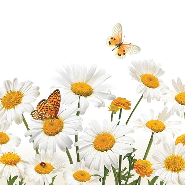 Servietten 33x33 cm - Gänseblümchen & Schmetterlinge