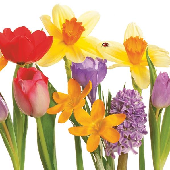 Servietten 33x33 cm - Bunte Frühlingsblumen