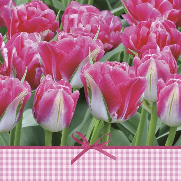 Servietten 33x33 cm - Rosa Tulpen Zeit