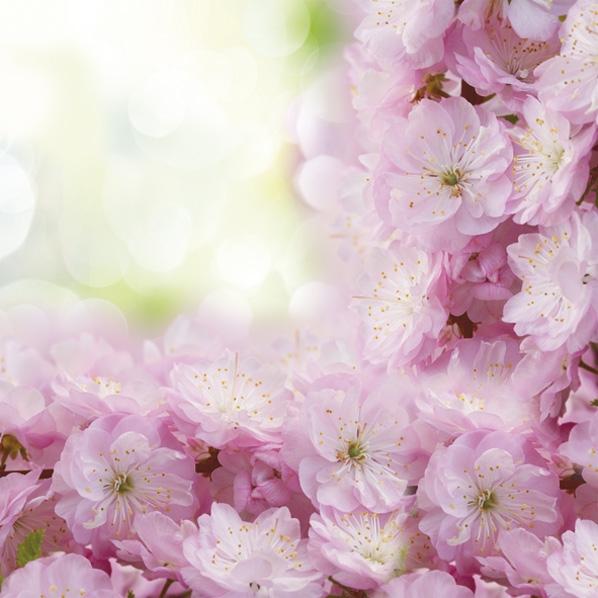 Servietten 33x33 cm - Blossoming Cherry Frame