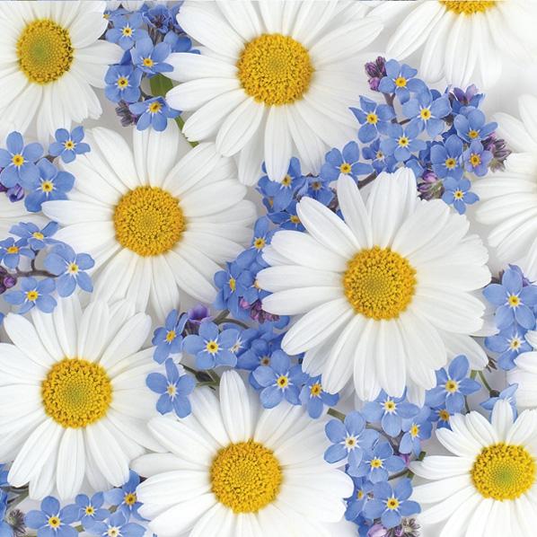 Servietten 33x33 cm - Gänseblümchen und Vergissmeinnicht