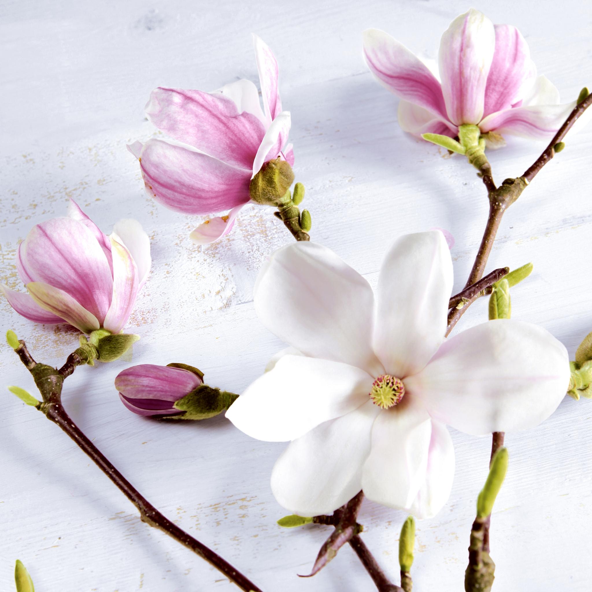 Servietten 33x33 cm - Magnolia
