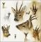 Servietten 33x33 cm - Portraits Of Deer